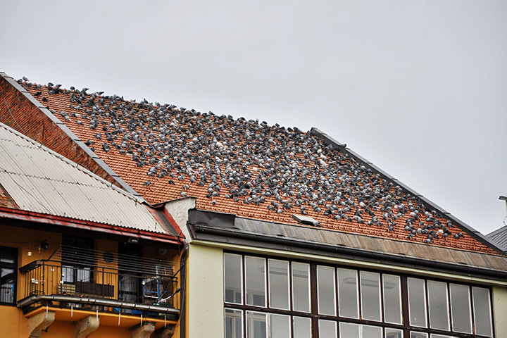 A2B Pest Control are able to install spikes to deter birds from roofs in Norbury.