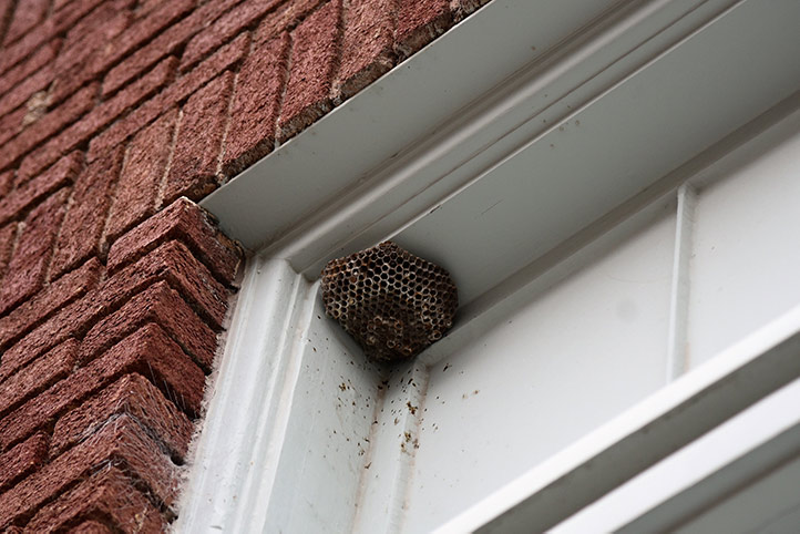 We provide a wasp nest removal service for domestic and commercial properties in Norbury.